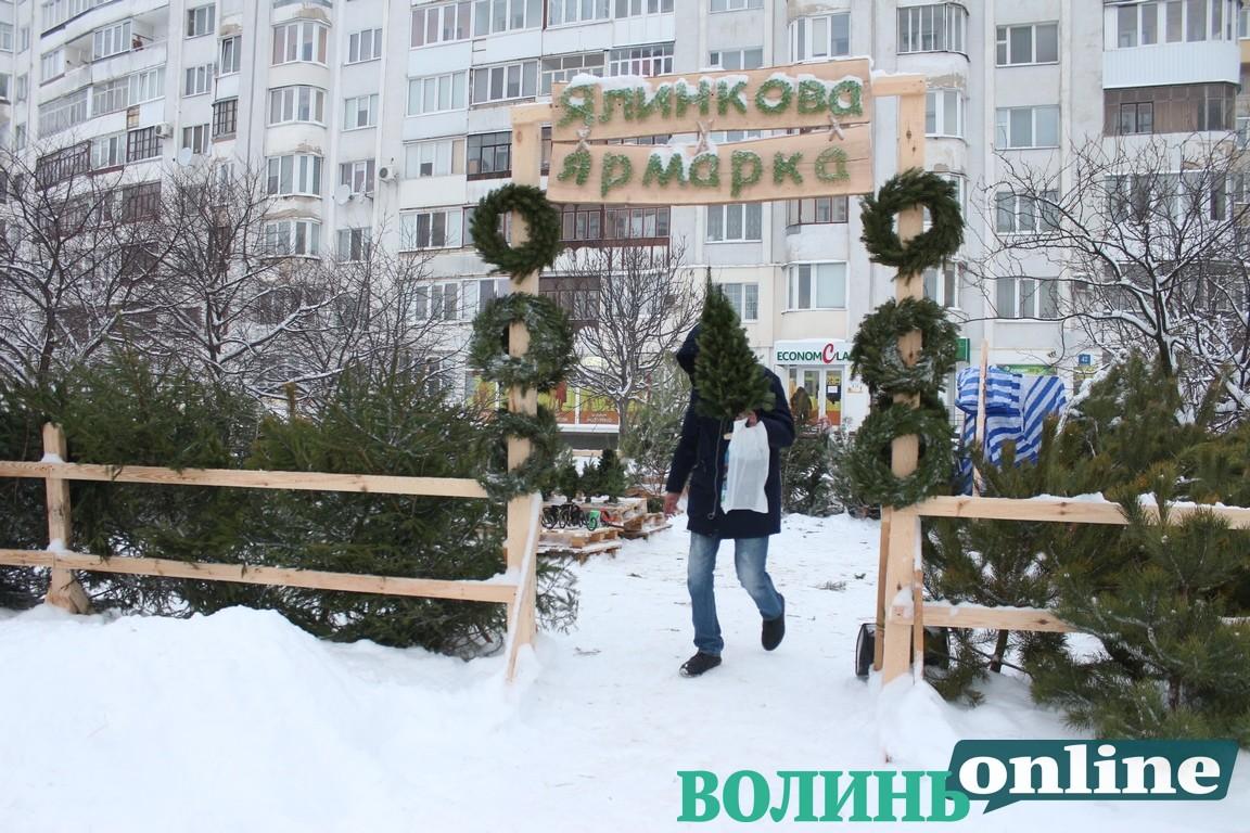 У Луцьку розпочали продаж новорічних ялинок. ЦІНИ