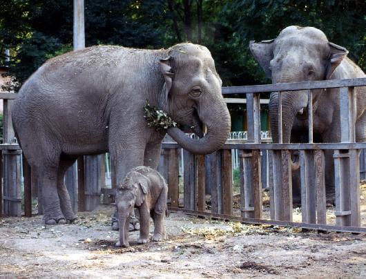 В Одесі горів зоопарк