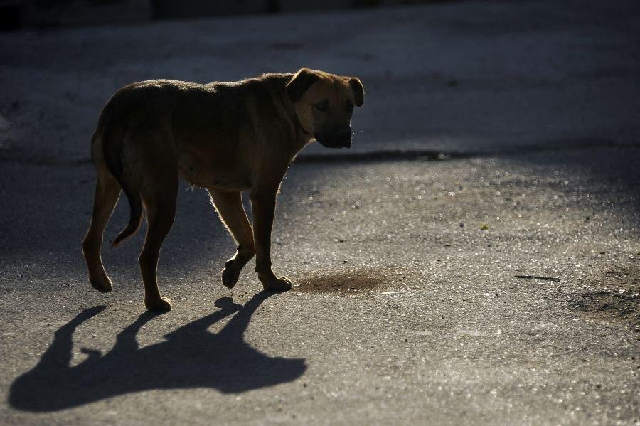 Скільки у Луцьку витратять на відлов безпритульних тварин