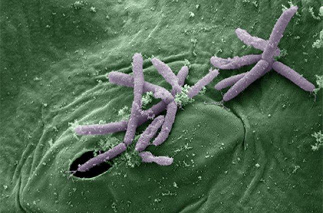 Вчені знайшли в Арктиці стійкі до антибіотиків бактерії