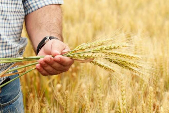 У 2018 році волинські аграрії отримали суттєву фінансову підтримку від держави