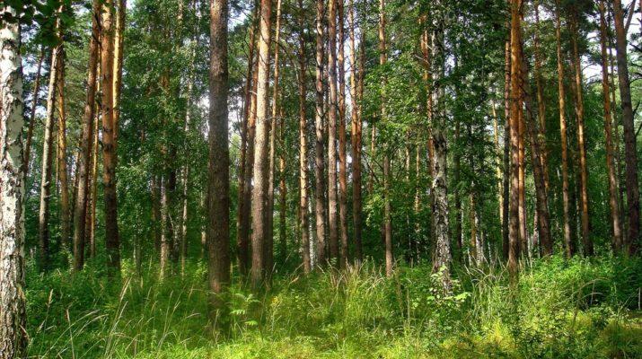 Волинські ліси додали бюджетам понад 88 мільйонів гривень