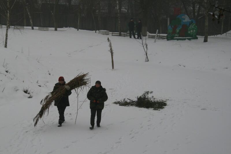У центральному парку Луцька від задухи рибу рятують лунками з очеретом. ФОТО