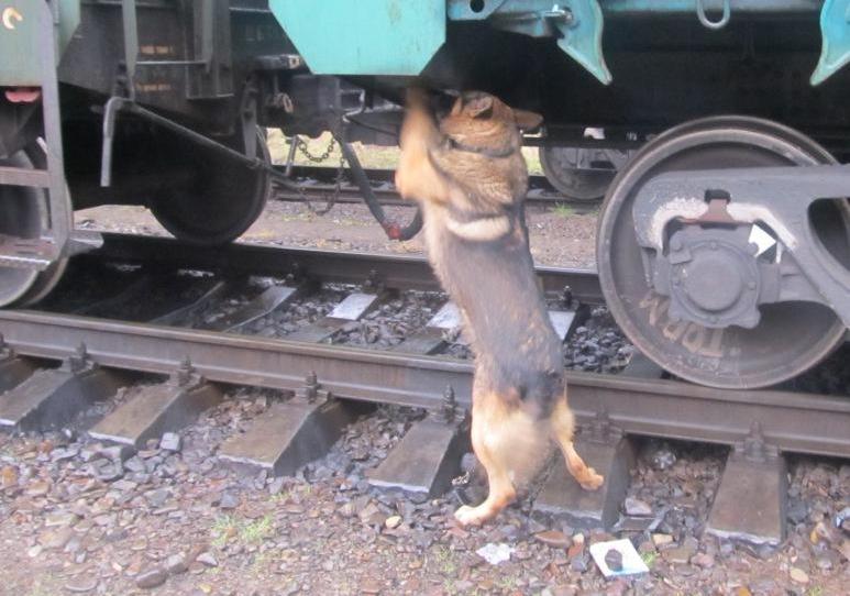 На Волині пес виявив контрабандні сигарети