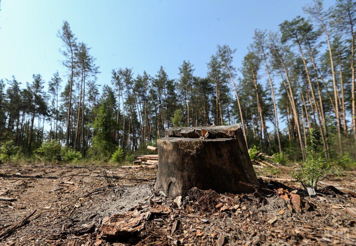 На Волині правопорушник сплатить понад 100 тисяч гривень за шкоду, заподіяну лісу