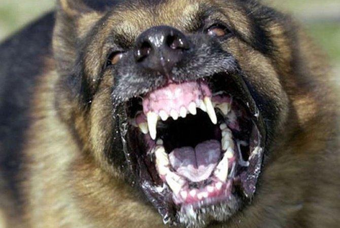 У волинському місті бродячий пес покусав жінку. ВІДЕО