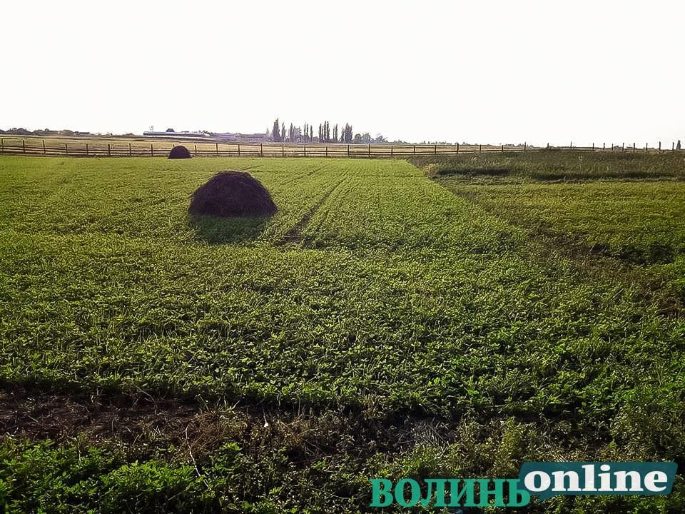 Ринок сільськогосподарських земель Волині існує, але – спотворений