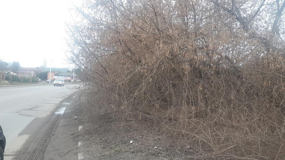 На вулиці Луцька замість тротуару  — дерева та кущі. ФОТО