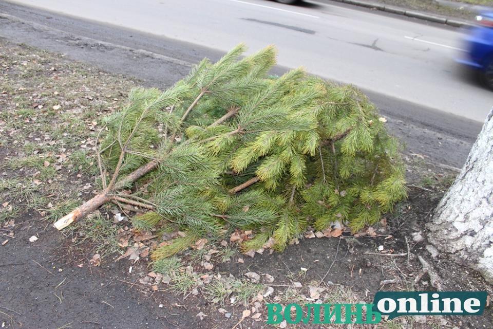 У Луцьку на тротуар викинули новорічні дерева