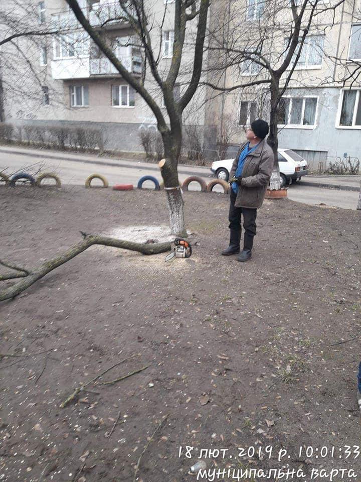 У Луцьку комунальники різали дерева без дозволу — їх спіймали муніципали