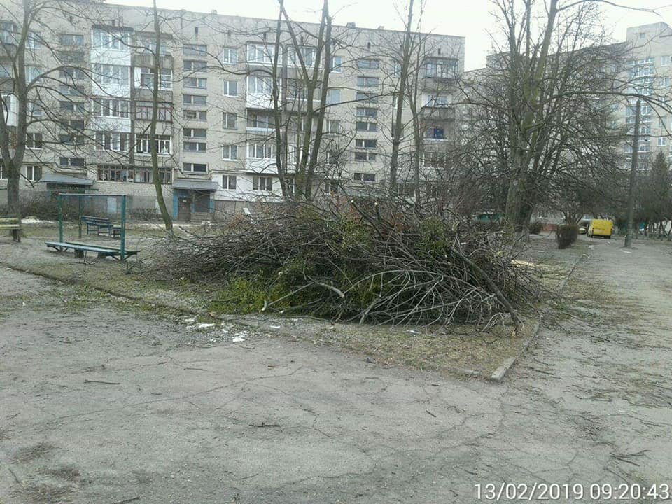 У Луцьку голову ОСББ заставили прибрати зрізані гілки дерев. ФОТО