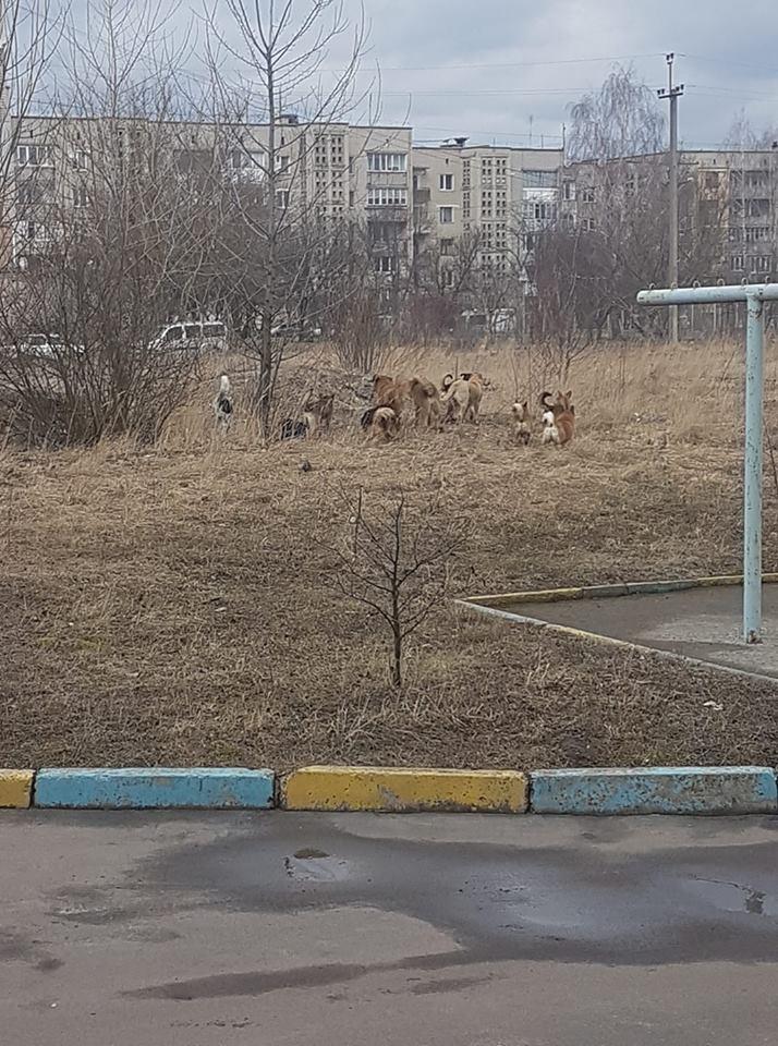 У місті на Волині жінку оточила ціла зграя собак