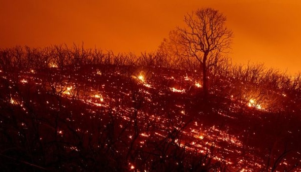 У Новій Зеландії лютує лісова пожежа