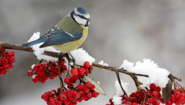 Весна прийде в Україну з мокрим снігом