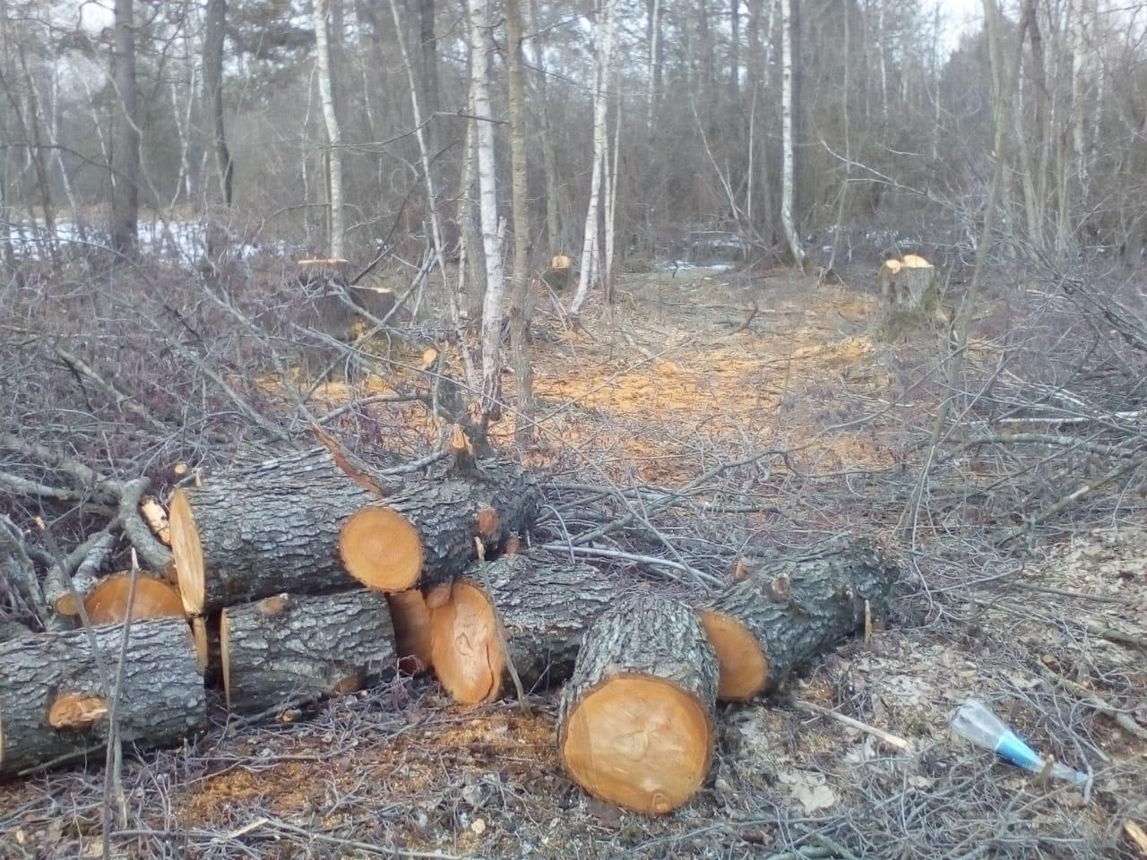 Луцькі прикордонники поблизу кордону затримали лісорубів. ФОТО
