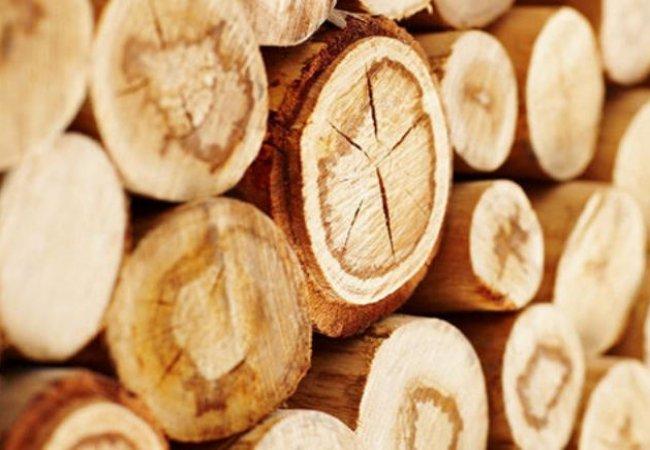 На Волині затримали вантажівку з краденою деревиною