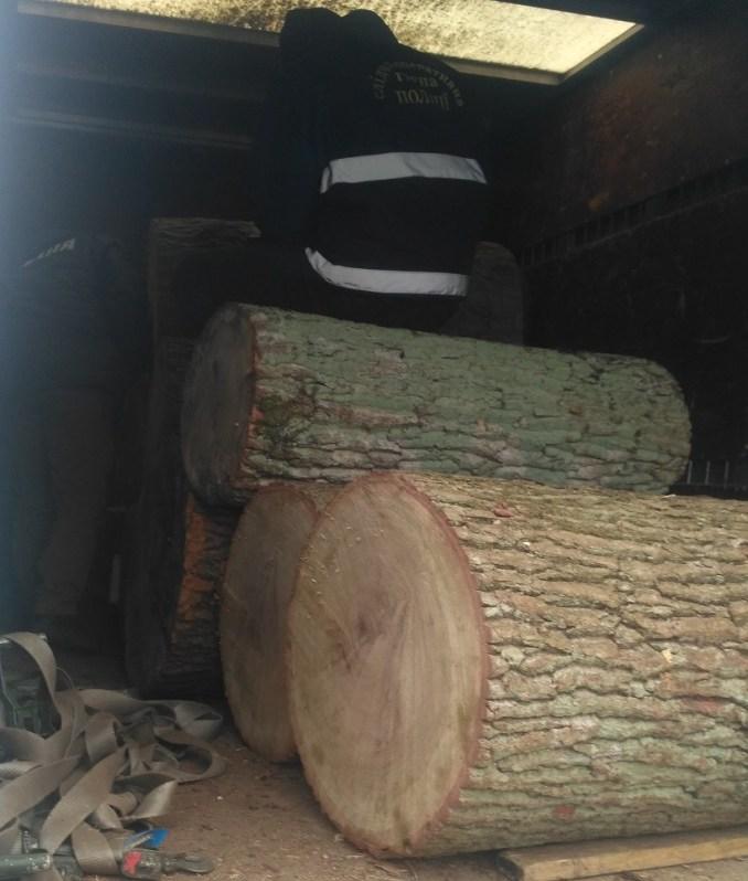 У Луцьку затримали вантажівку з дубовими колодками