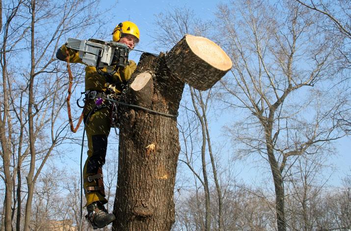 У Луцьку планують витратити 1,6 мільйона гривень на обрізування гілок дерев