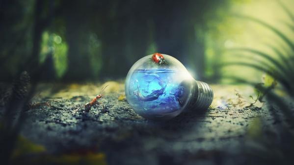 Луцьк долучиться до «Години Землі»