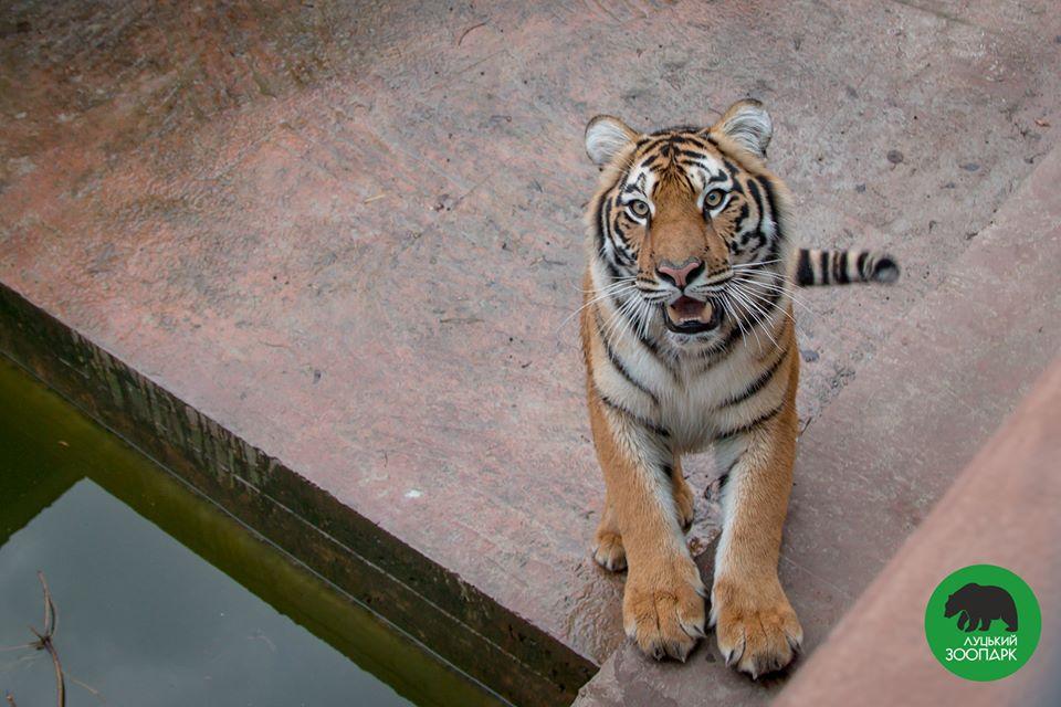 Мешканці Луцького зоопарку знялися у весняній фотосесії