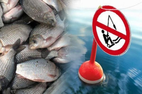 Волинян попереджають про заборону вилову риби
