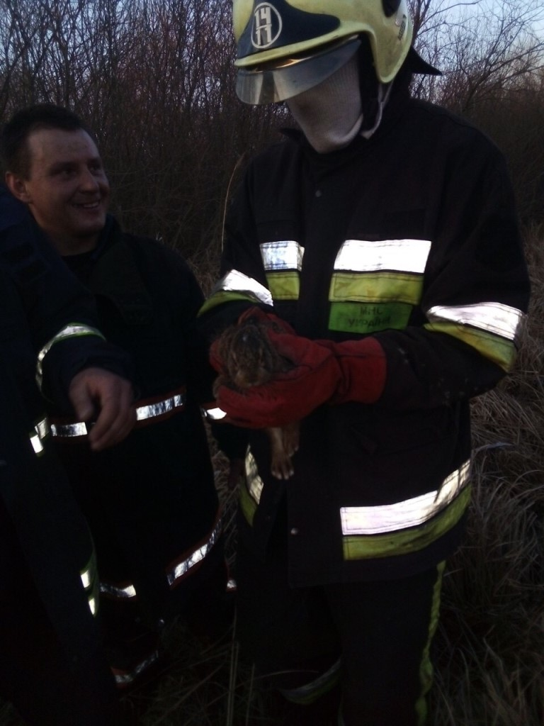 На Волині під час пожежі сухої трави врятували зайчика