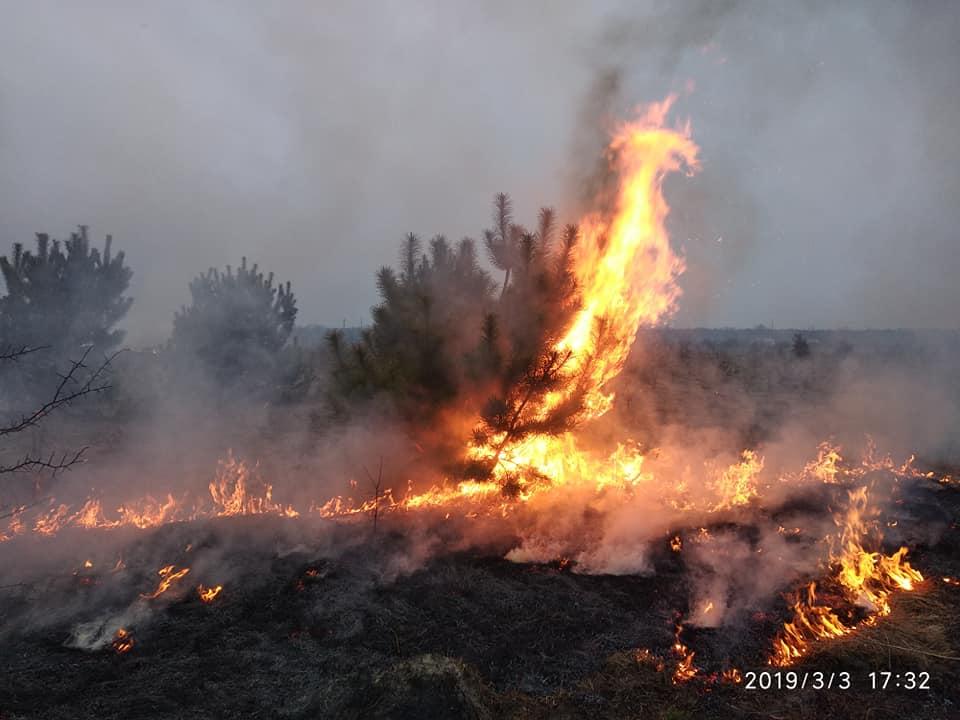 На Волині спалили молодий ліс. ФОТО