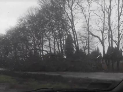 Неподалік Луцька сильний вітер повалив дерево на дорогу. ВІДЕО
