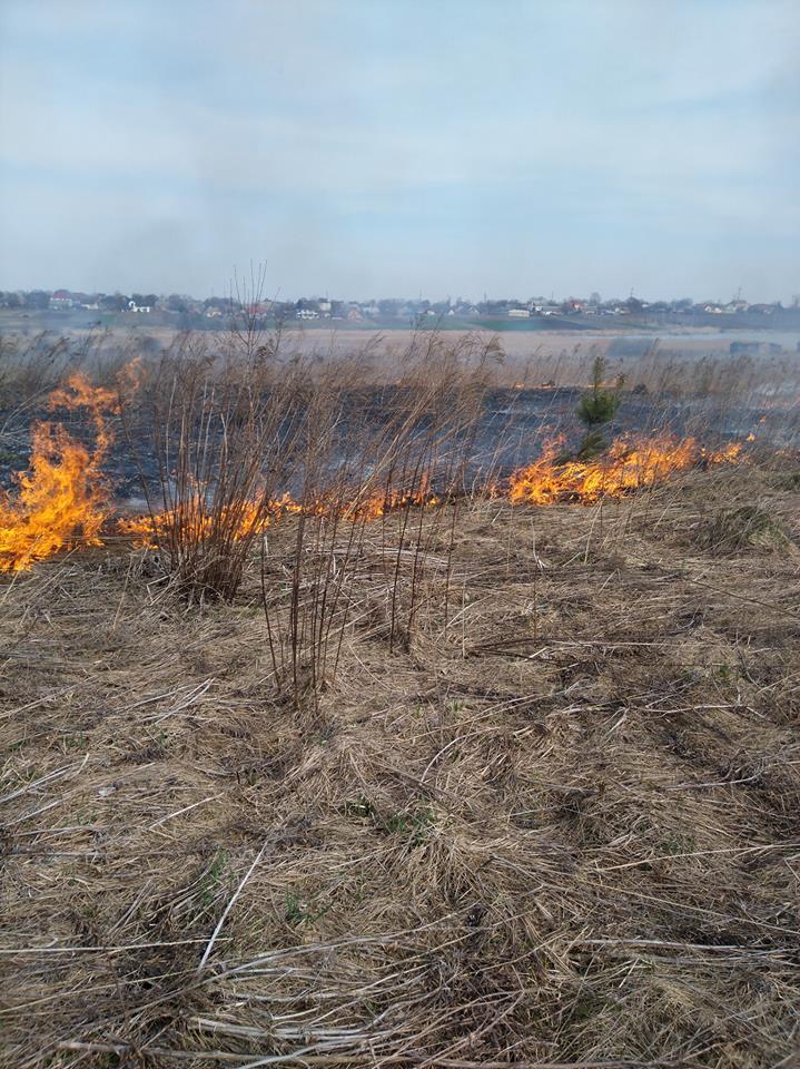 Поблизу Луцька горить поле. ФОТО