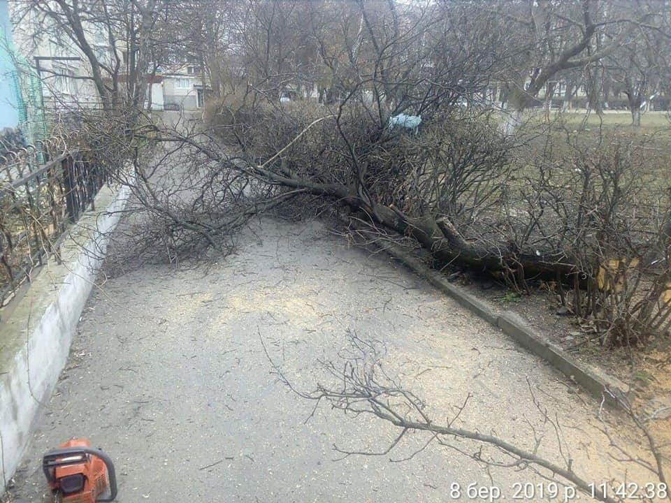 Лучанин незаконно зрізав дерева. ФОТО