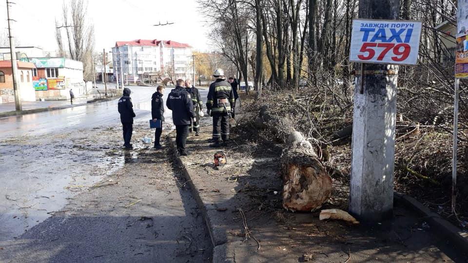 Негода в Україні: дерево вбило дитину