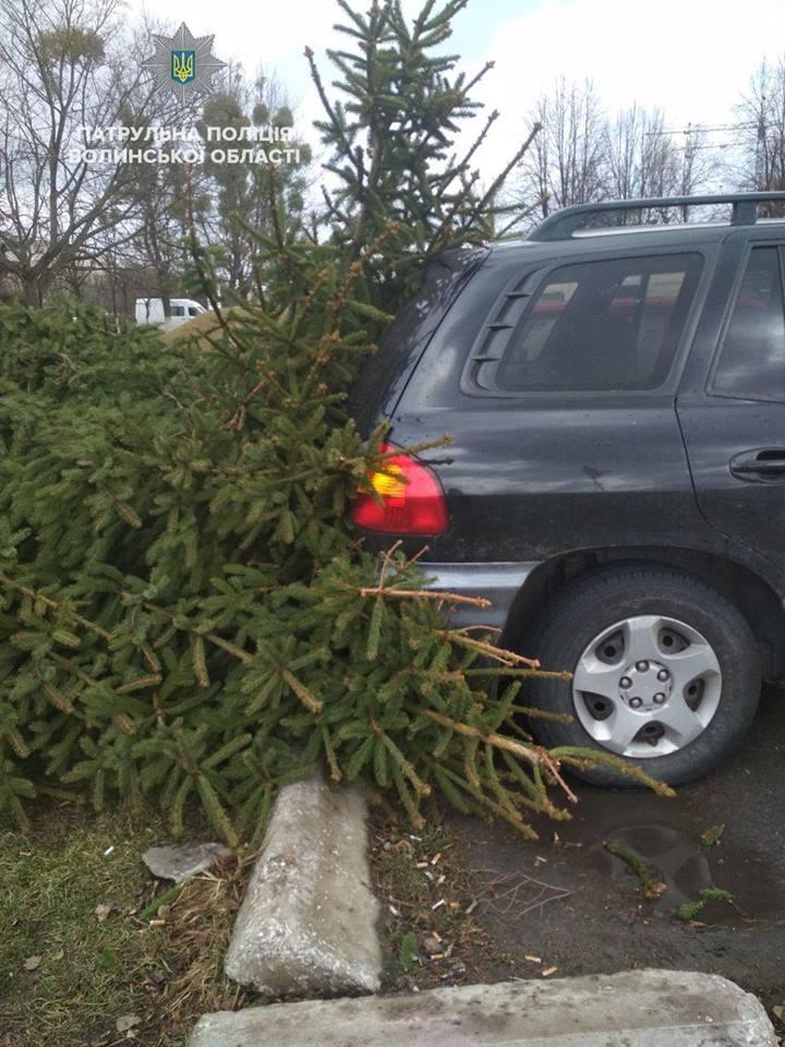 У Луцьку дерево впало прямо на припаркований автомобіль. ФОТО