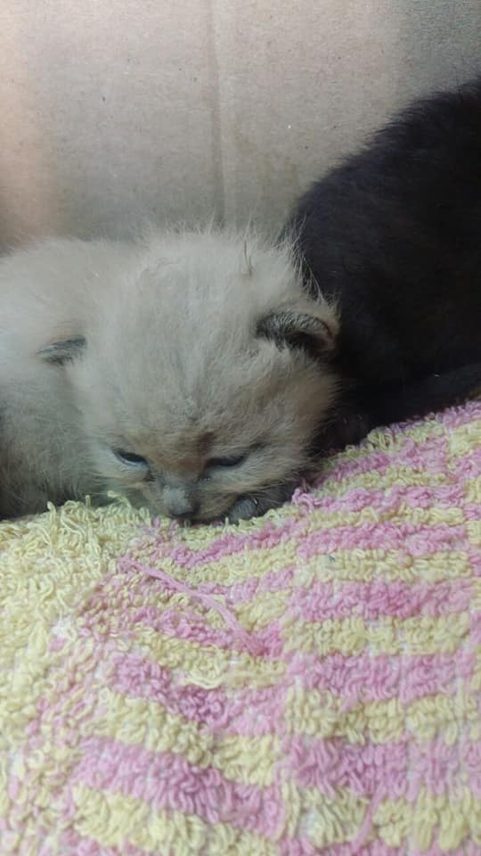 У Луцьку парочка викинула кошенят у смітник