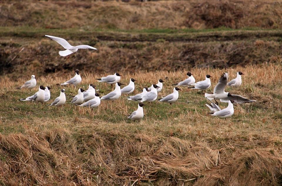 У Ківерцівському парку спостерігали за весняною міграцією птахів. ФОТО