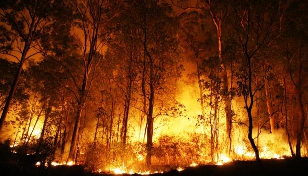 На півдні Австралії через рекордну спеку вирують лісові пожежі
