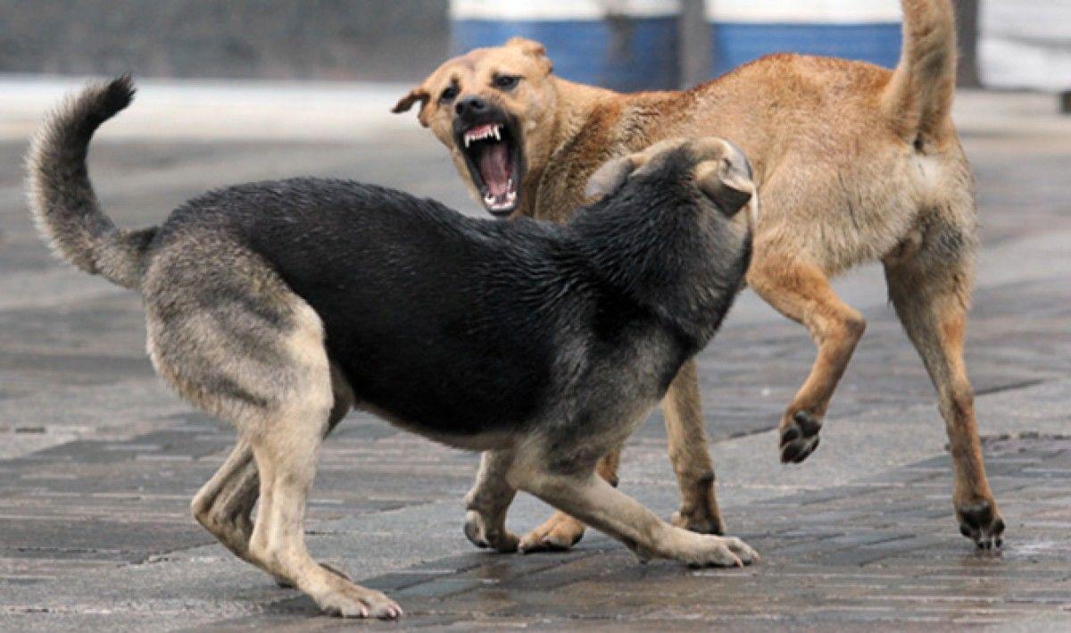 У Луцьку собаки напали на дівчинку на велосипеді