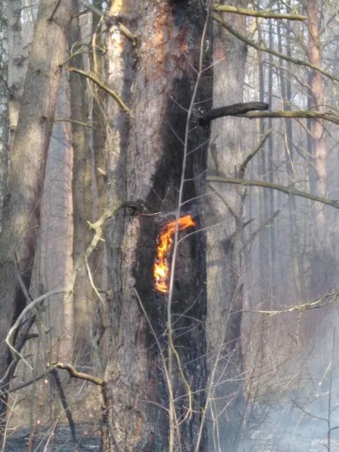 На Волині докладають усіх зусиль, щоб погасити вогонь у лісі. ВІДЕО