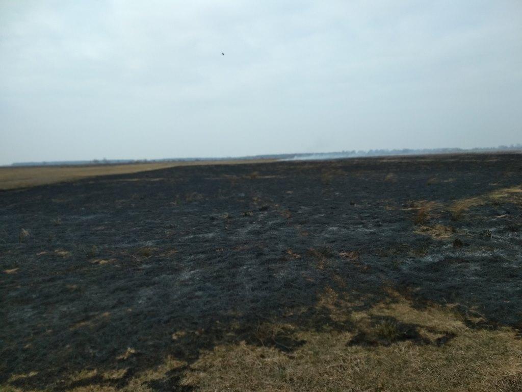 На Волині за тиждень трапилось майже три десятки загорань сухої трави