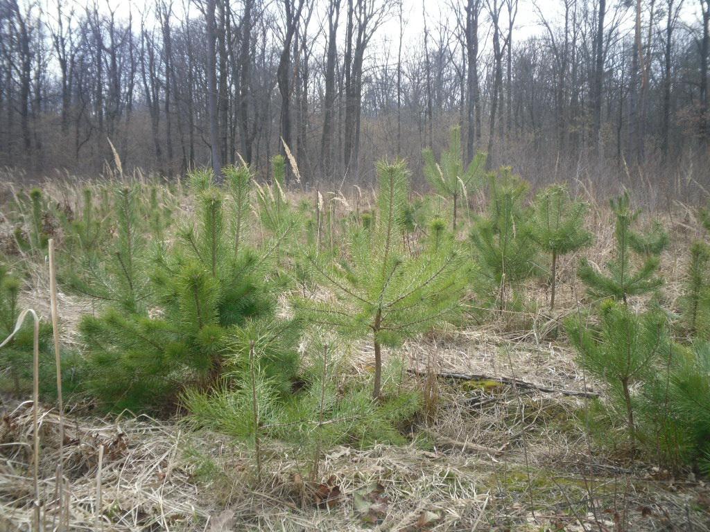Школярі Луцька вперше висаджували ліс. ВІДЕО