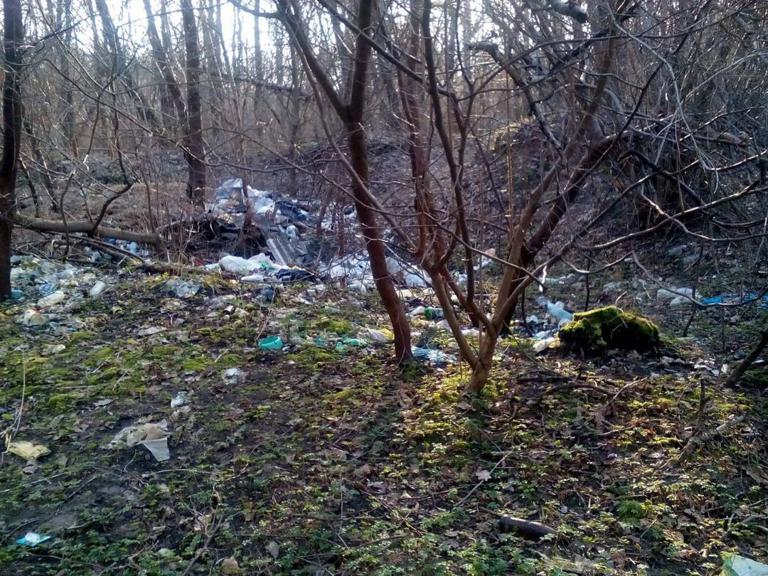 Ліси Волині потопають у смітті
