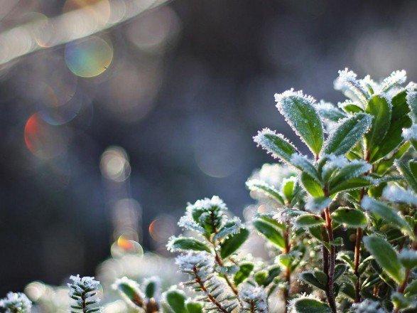 Волинян попереджають про заморозки