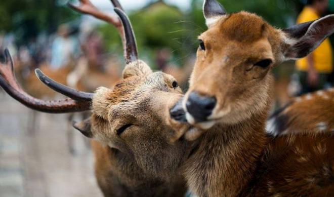 На Волині розпочався «сезон тиші» для диких тварин