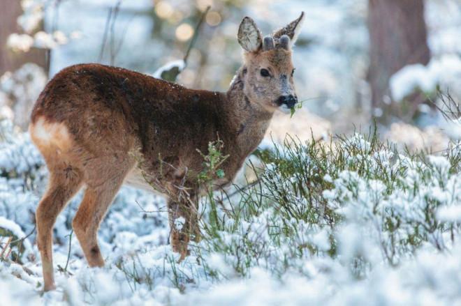Завершили зимовий облік мисливських тварин Волині