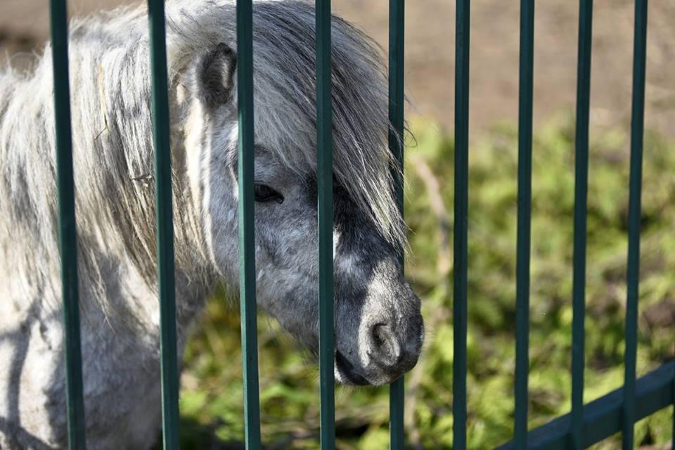 Показали весняні фото Луцького зоопарку. ФОТО