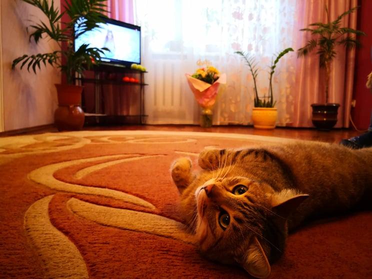 Як кіт допомагає луцькому ріелтору продавати квартиру. ВІДЕО*