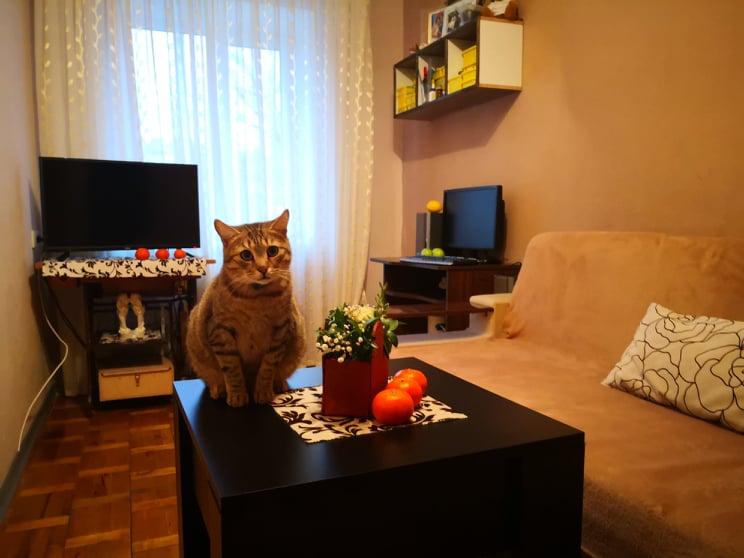 У Луцьку кіт продає на вигідних умовах квартиру. ВІДЕО*