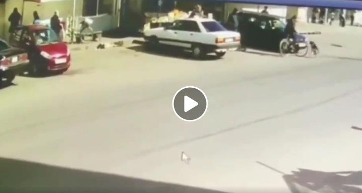 У Ковелі чоловік навмисно штовхнув пса під колеса. ВІДЕО 18+