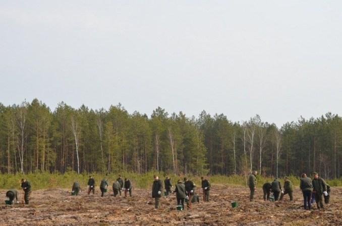 На Волині завершили кампанію з лісовідновлення. ФОТО