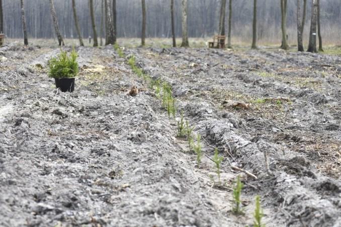 Волиняни висадили майже гектар лісу