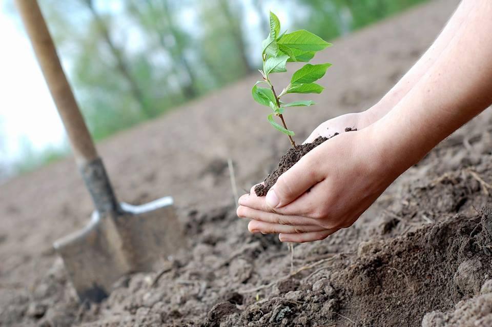 Мешканців села поблизу Луцька запрошують посадити власне дерево